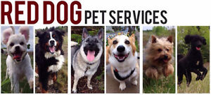 Group Walks with Red Dog Services! Registered&Insured Since 2013