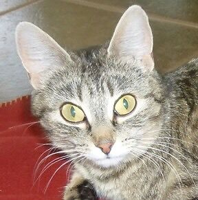 MEOW Foundation's Magical Maz Seeks Forever Home