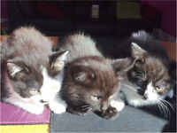 3 female kittens need forever homes