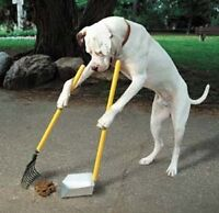 Pet waste clean up