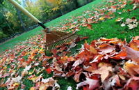 Yard cleaning service