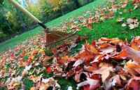 Need your lawn raked??