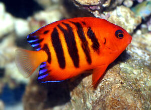 LARGE SELECTION OF BEAUTIFUL CORALS, FRAGS & FISH