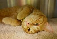 """Young Male Cat - Domestic Short Hair: """"Rooky"""""""