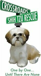 Crossroads Shih Tzu Rescue Ebay For Charity