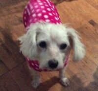 **Sweet Autumn - TERRIER cross is available for adoption****