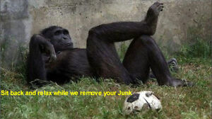 """Need """"Junk Gone"""" same-day? Call 647.701.1899 by 7:30 pm"""
