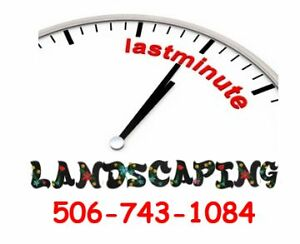 Last Minute Landscaping Ideas?? We're here to help