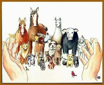 Godot Animal Sanctuary
