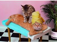 Swedish massage by Cat