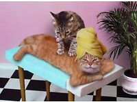 Revitalising Massage in Basingstoke by English Sadie!