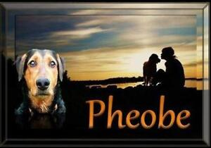 "Adult Female Dog - Airedale Terrier: ""Pheobe"""
