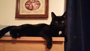 Beautiful black cat available for rehoming