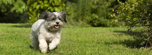 Vancouver Online Business Opportunity Targeting Dog Owners