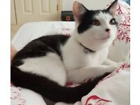 Male black and white 10 month old kitten missing from Woodock Road, NR3 - REWARD for safe return