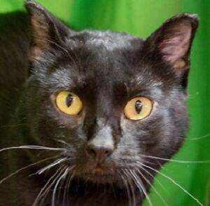 MEOW Foundation's handsome Fisher looking for loving home!