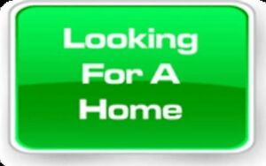 HOUSE/UNIT WANTED Townsville Townsville City Preview