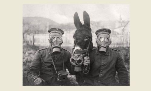 ww1 gas mask ebay