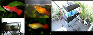young fresh water fish for sale