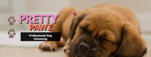 Small Breed Dog Grooming In Innisfil - 15 Years Of Experience