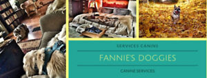 Vacances de luxe pour chiens - Luxury Doggy Vacation