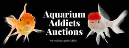 online fish auction 24/7 Aussie wide