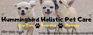 Affordable Professional Dog Sitting and Boarding in Home Setting