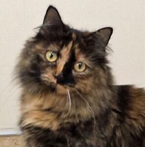 MEOW Foundation's blossoming Plie looking for purrrfect match!