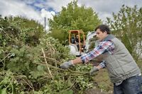 TREE REMOVAL 20% OFF ALL SERVICES.