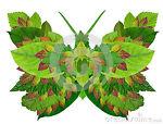 Green Butterfly Kiddie Korner