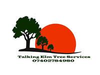 Talking Elm Tree Surgeons Norwich