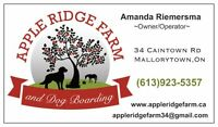 Volunteer Opportunity's Available @ Apple Ridge Farm Horse Camp