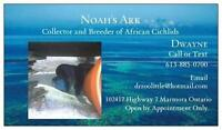 Open this Sunday to the Public (African Cichlid Breeder)