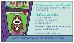 Pension pour chiens à Candiac en milieu familial