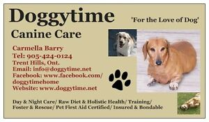 Dog Boarding with Doggytime Canine Care & Rescue Belleville Belleville Area image 2