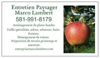 Nettoyage printanier, Tailles arbres fruitiers (avril)