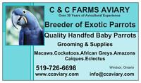 Boarding & Grooming for Your Pet Parrot - C & C Farms Aviary