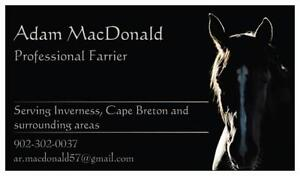 Horse Farrier taking on new clients in and around Inverness