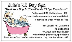 "Dog Grooming ""Julie's K9 Day Spa"""