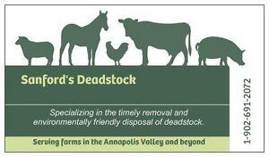 Sanford's Deadstock