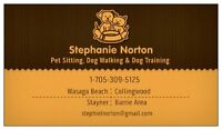 DO YOU NEED A DOG WALKER OR PET SITTER?!