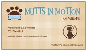Mutts In Motion Professional Dog Walking