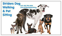 Striders Dog Walking & Pet Sitting - Accepting New Clients