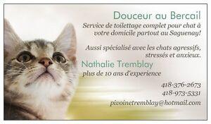 Toilettage pour chat à votre domicile Saguenay Saguenay-Lac-Saint-Jean image 1
