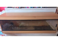 Beech Colour Vivarium - 4 x 1 x 1 - Good Condition