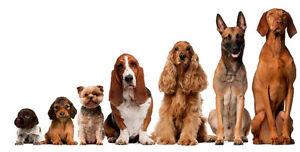 Gardienne canine