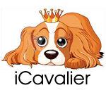 icavalier