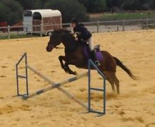 Looking for a lease horse. Clarkson Wanneroo Area Preview
