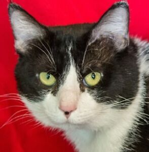 MEOW Foundation's love bug Geoff looking for purrfect home!