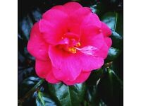 The Lady Gardener Lakeland Gardening Services